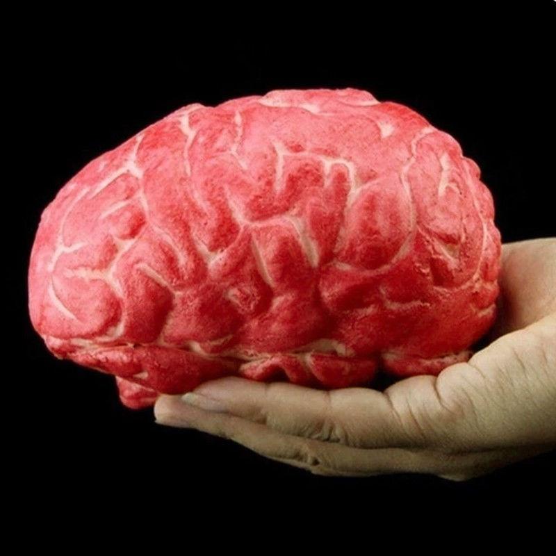 brain 02.jpg